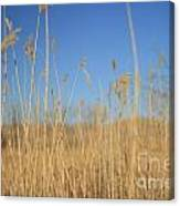 Grass In Motion Canvas Print