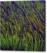 Grass In The Lake Canvas Print
