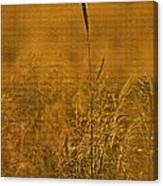Grass In The Light Of The Rising Sun Canvas Print
