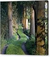 Grass Lane Canvas Print