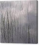 Grass Mirrors Sky Canvas Print