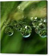 Grass Morning Dew Canvas Print
