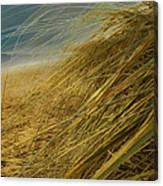 Grass To Sea Canvas Print