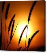 Grasses At Sunset - 1 Canvas Print