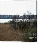Grasses By The Lake Canvas Print