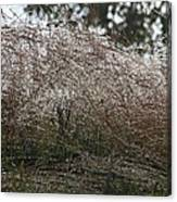 Grasses Glittering With Thousand Of Rain Drops Canvas Print
