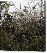 Grasses Glittering With Thousand Of Raindrops Canvas Print