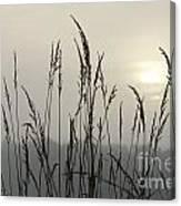 Grasses In Iceblue Landscape Canvas Print