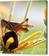 Grasshopper Antena Up Canvas Print