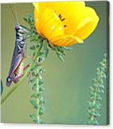 Grasshopper Be Still Canvas Print
