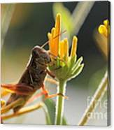 Grasshopper Delight Canvas Print