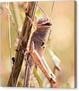 Grasshopper In The Marsh Canvas Print