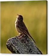 Grasshopper Sparrow Antietam Canvas Print