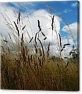 Grassland Canvas Print