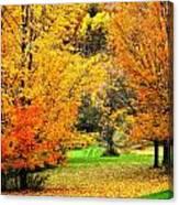 Grassy Autumn Road Canvas Print