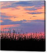 Grassy Sunset Canvas Print