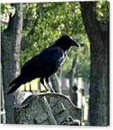 Graveyard Bird On Top Of A Tombstone Canvas Print