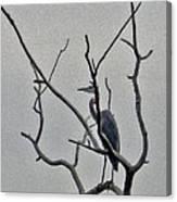 Gray Bird Canvas Print