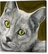 Gray Cat With Green Eyes Canvas Print
