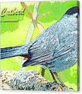 Gray Catbird Digital Art Canvas Print
