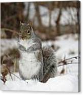 Gray Squirrel In Snow Canvas Print