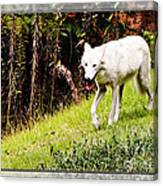 Gray Wolf 2 Canvas Print