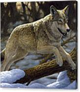 Gray Wolf - Just For Fun Canvas Print