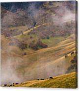 Grazing Above The Fog Canvas Print