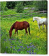 Grazing Amongst The Wildflowers Canvas Print