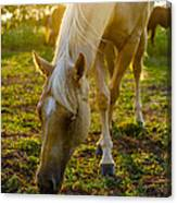 Grazing At Sunset Canvas Print