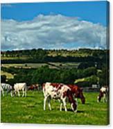 Grazing Cows Canvas Print