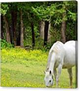 Grazing In Golden Fields Canvas Print