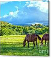 Grazing In Paradise Canvas Print