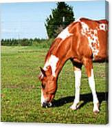 Grazing In Style Canvas Print