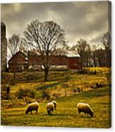 Grazing North South East And West Canvas Print