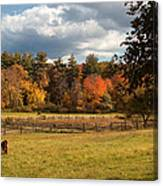 Grazing On The Farm Canvas Print