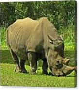Grazing Rhino Canvas Print