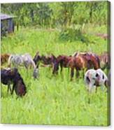 Grazing Trail Horses Canvas Print
