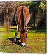 Grazing With An Attitude Canvas Print