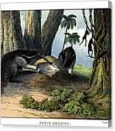 Great Anteater Canvas Print