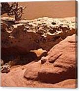 Great Basin Rattlesnake Canvas Print