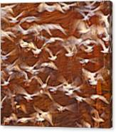 Great Black-backed Gulls Canvas Print
