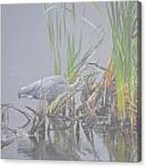 Great Blue Heron 3 Canvas Print