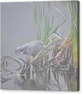 Great Blue Heron 4 Canvas Print