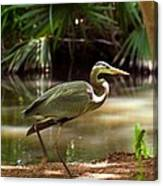 Great Blue Heron By Pond Canvas Print
