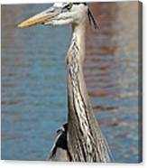 Great Blue Heron By The Water Canvas Print