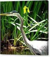 Great Blue Heron By Yellow Flower Canvas Print