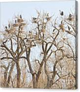Great Blue Heron Colony Canvas Print