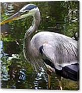 Great Blue Heron - Colorful Reflections Canvas Print