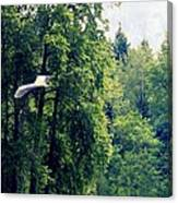 Great Blue Heron Flying Past The Trees Above Trojan Pond 2 Canvas Print